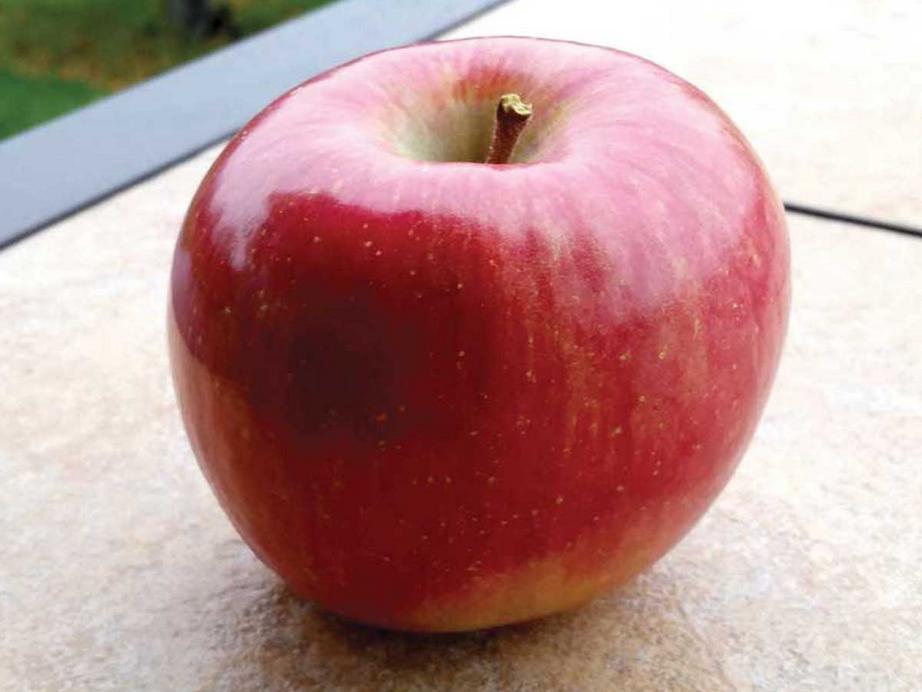 Okanagan Specialty Fruits