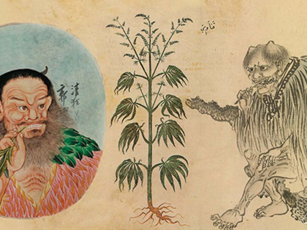 the history of the use of marijuana in the new world